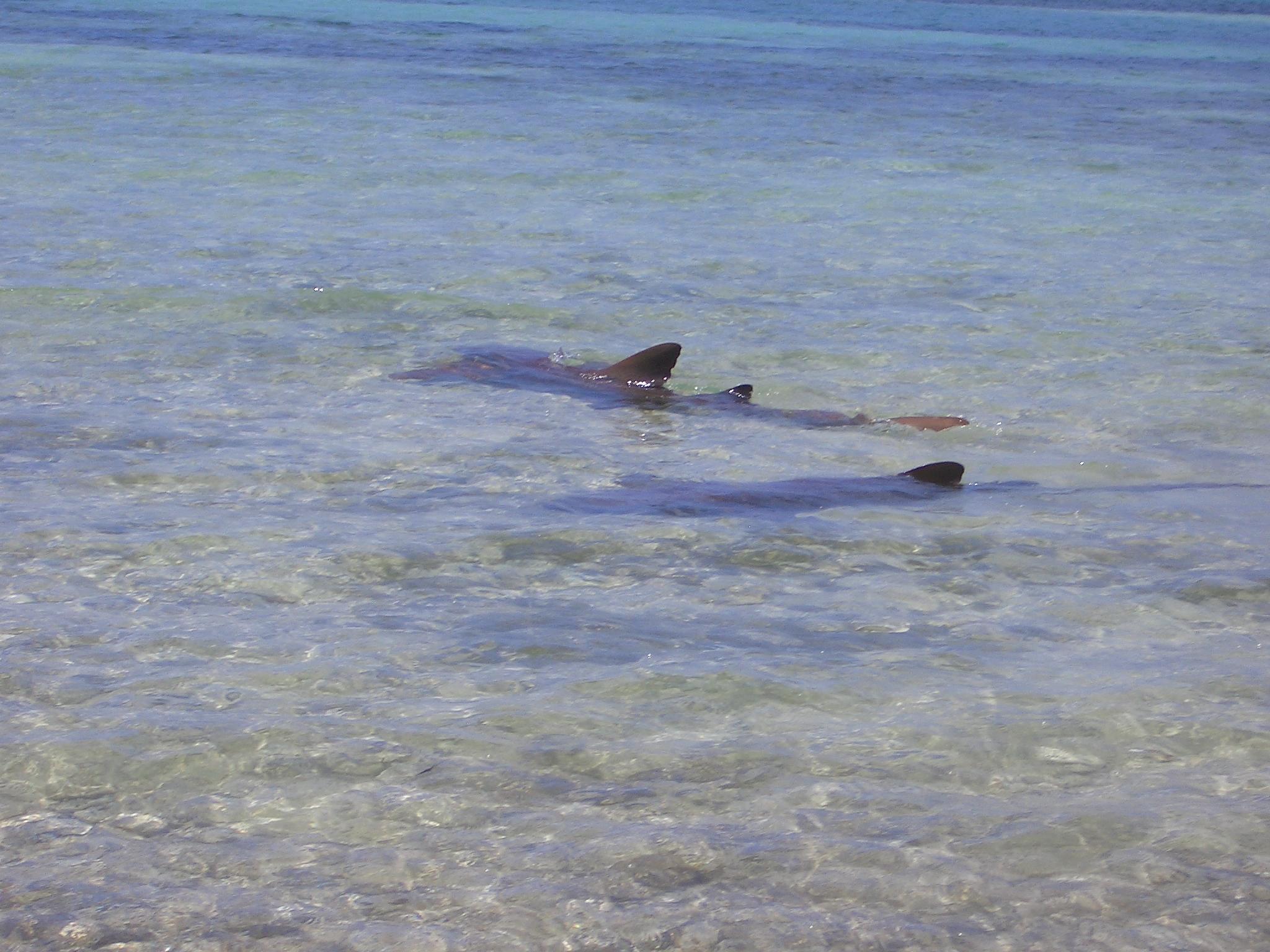 CIMG4000 Bahamas