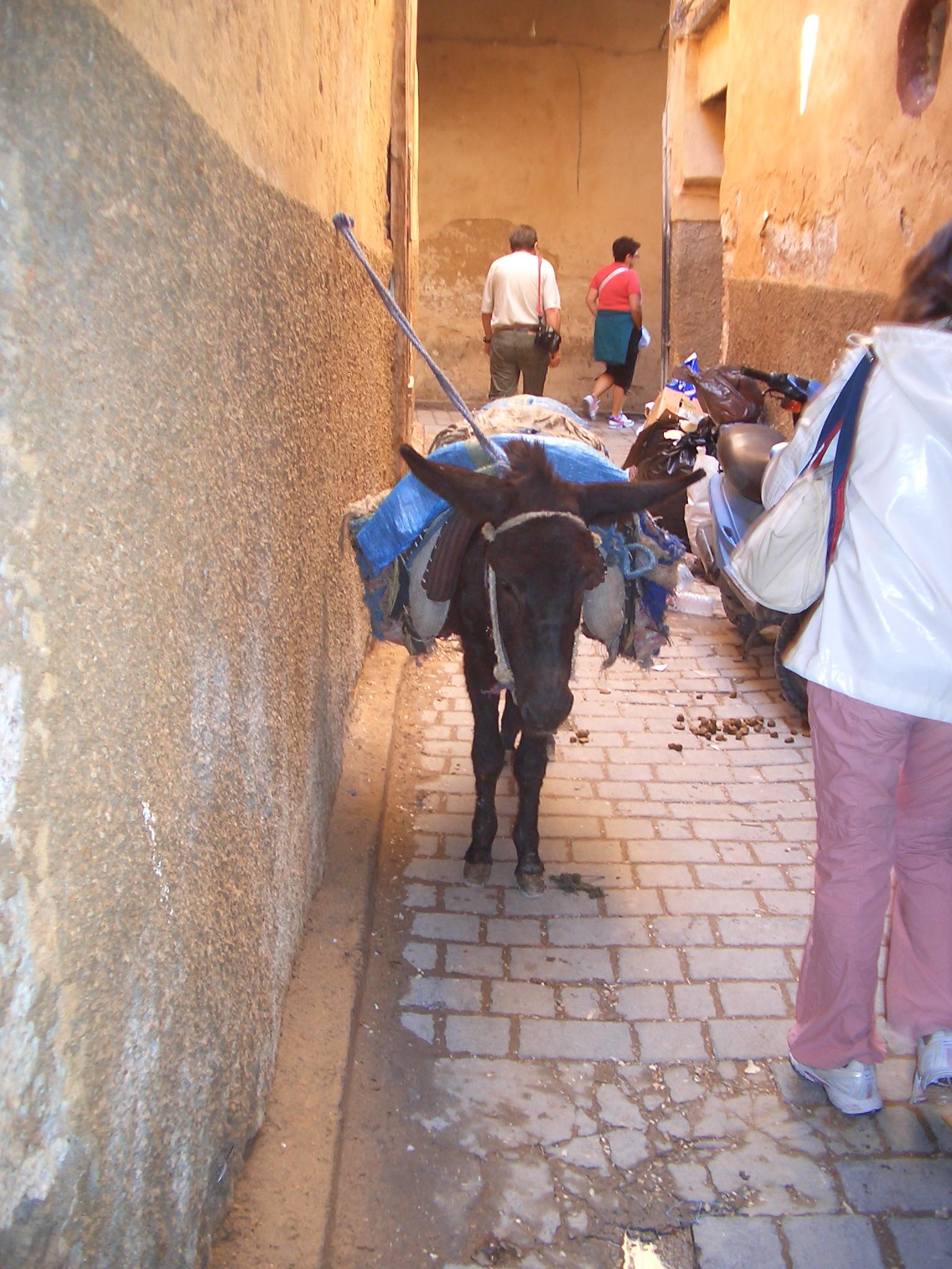 gli asinelli di Fes Marocco