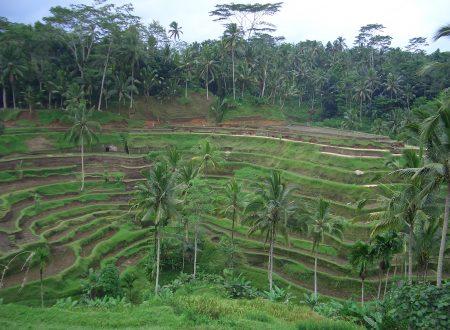 Bali l'isola degli Dei