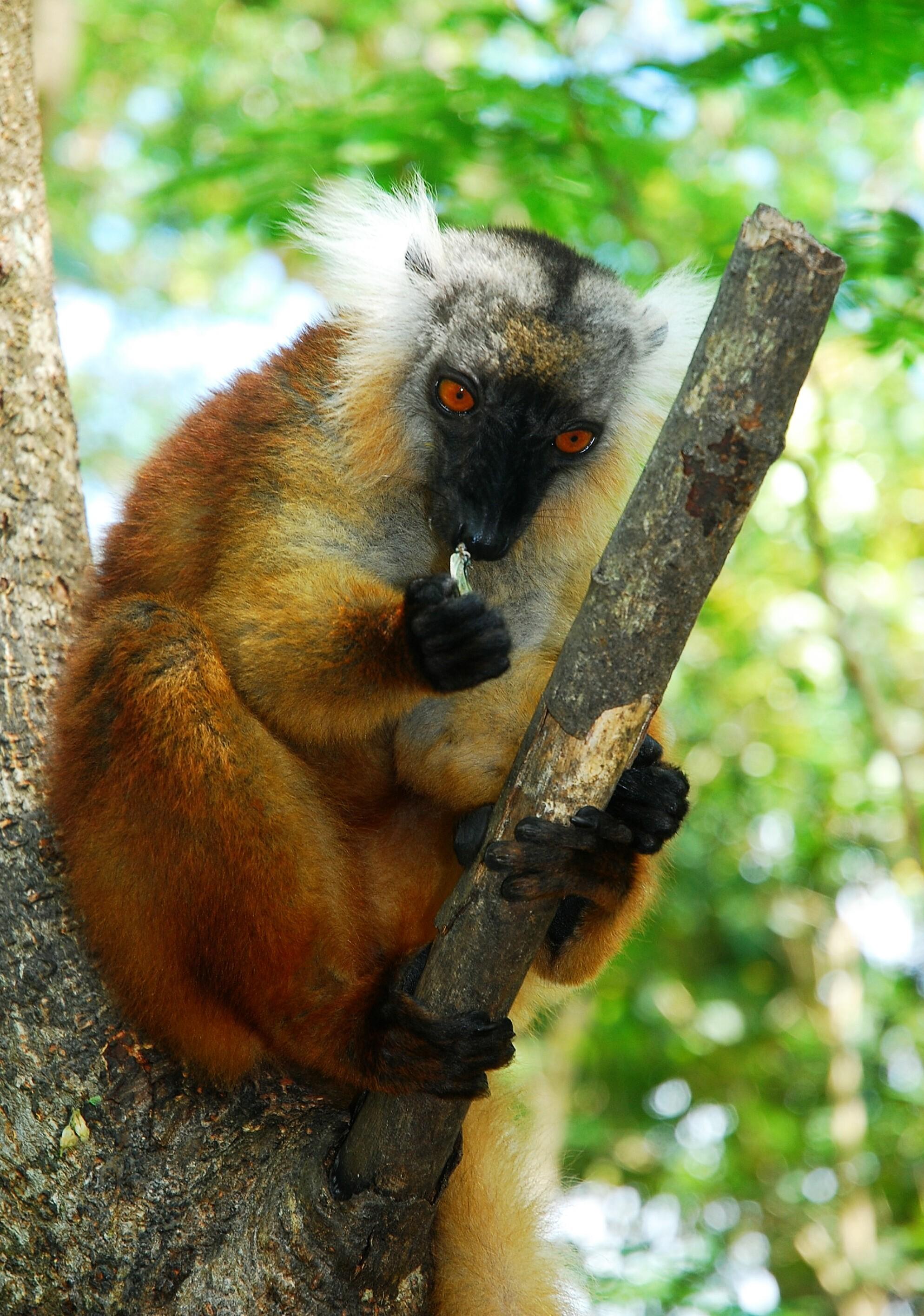DSC_0065 Madagascar