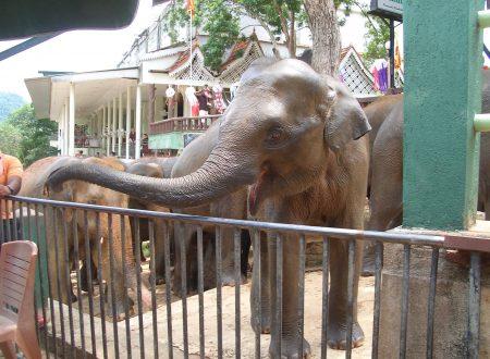 Ricordando un elefante