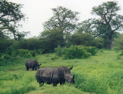 La riserva di Bandia